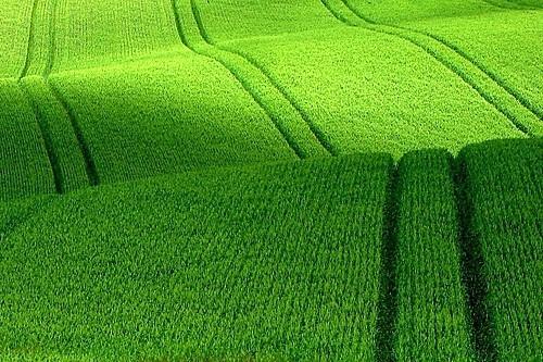 ブラジル穀倉地帯2 Zona Cereais...