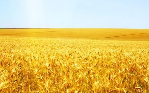 ブラジル穀倉地帯1 Zona Cereais: 遥かなるブラジル ~地球の反対側 ...